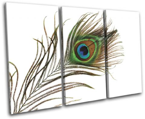 Peacock Feathers Animals - 13-1394(00B)-TR32-LO